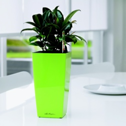office-plants-green-london-rent