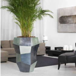 palm-office-plants-multi-premium-pot