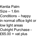 Kentia Palm Size – 1.6m Conditions – happy  in normal office light or low light areas  Outright Purchase - £65.00 + vat plus