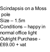 Scindapsis on a Moss  pole Size – 1.5m  Conditions – happy in normal office light  Outright Purchase - £69.00 + vat