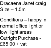 Dracaena Janet craig Size – 1.5m  Conditions – happy in normal office light or low  light areas  Outright Purchase - £65.00 + vat