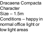 Dracaena Compacta Character Size – 1.5m  Conditions – happy in normal office light or low light areas