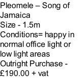 Pleomele – Song of Jamaica Size - 1.5m Conditions= happy in normal office light or low light areas  Outright Purchase - £190.00 + vat