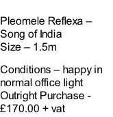 Pleomele Reflexa – Song of India Size – 1.5m  Conditions – happy in normal office light  Outright Purchase - £170.00 + vat