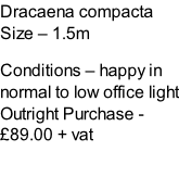Dracaena compacta Size – 1.5m  Conditions – happy in normal to low office light  Outright Purchase - £89.00 + vat