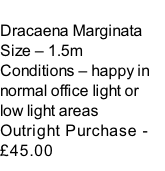 Dracaena Marginata Size – 1.5m  Conditions – happy in normal office light or low light areas  Outright Purchase - £45.00