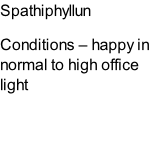 Spathiphyllun Conditions – happy in normal to high office light